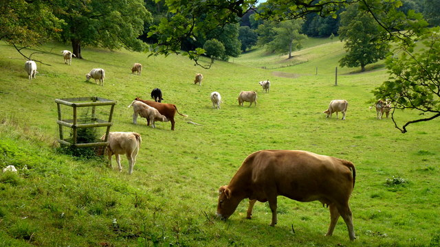 Livestock at Brockhampton