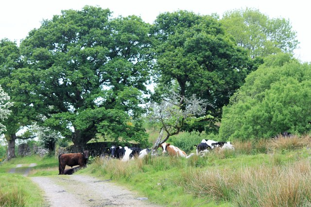 Cattle Sheltering