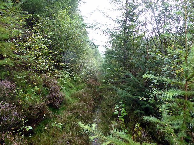 Overgrown path