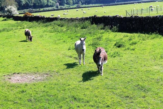 Abbey Donkeys