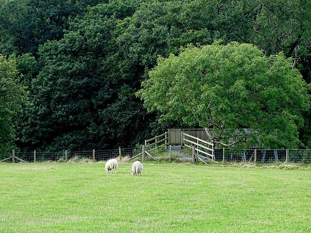 Pasture beside Afon Rheidol