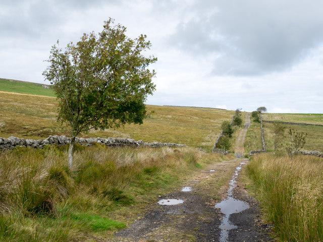 Rough lane below Park Fell