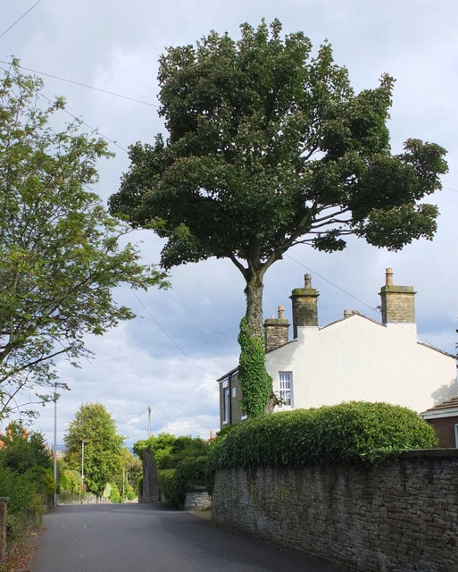 Moss Road, Billinge