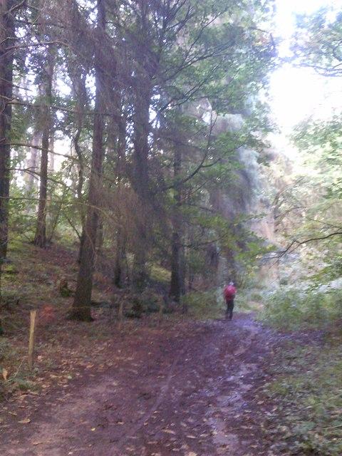 Tall Trees Path