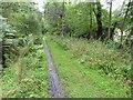 NJ2441 : The Speyside Way near Tom of Brock by Dave Kelly