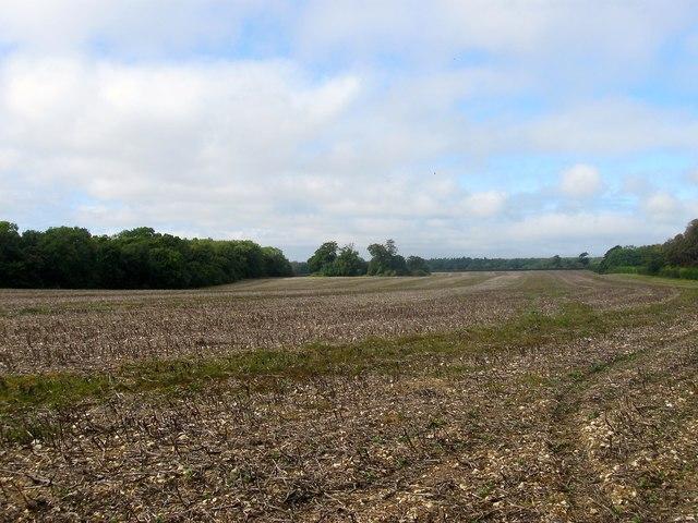 Selden Corner Field