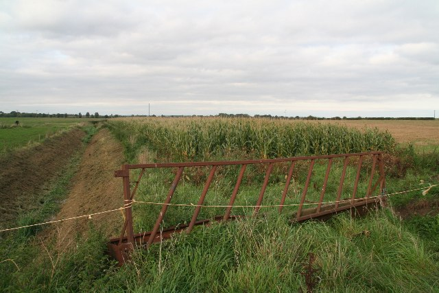 Maize and a hay rack barrier by Lady's Hole Bridge, Horsington Holmes