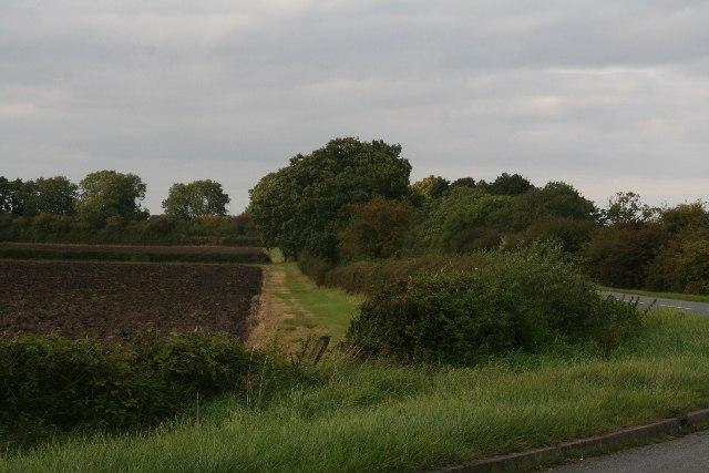 Fields by Hale Road, Horsington