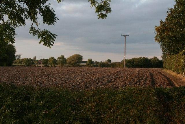 Fields off Hale Road, Horsington