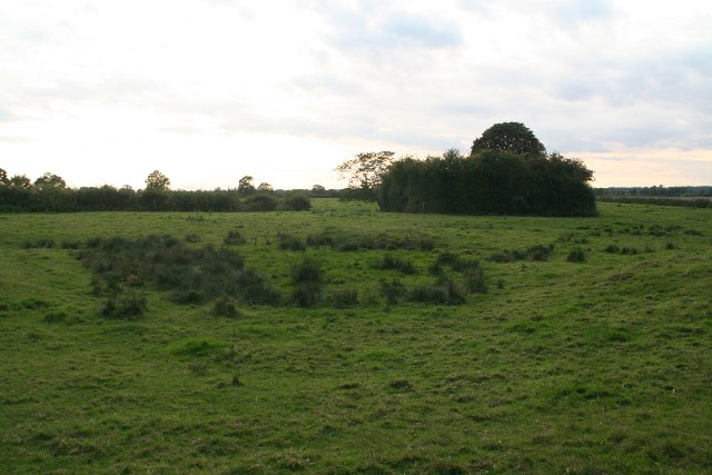 Marshy field behind Horsington Church