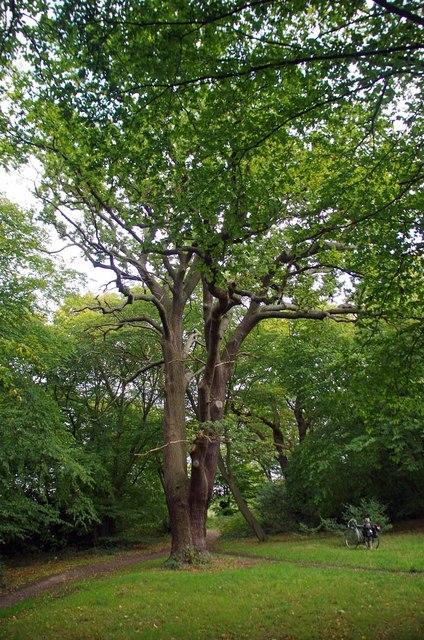 Magnificent Pollard in Highams Park