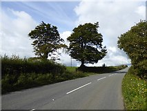 SX5594 : Trees by a field gateway, Holsworthy Road, near Yelland by David Smith