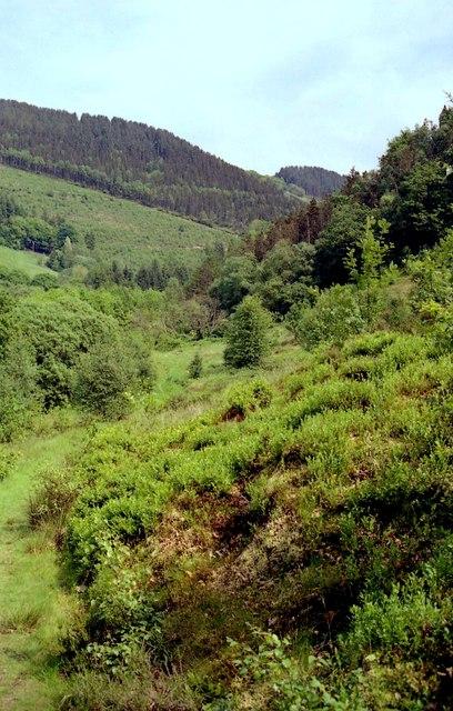Path in Cwm Rheidol