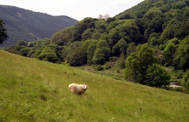 Pasture at Pontbren Plwca