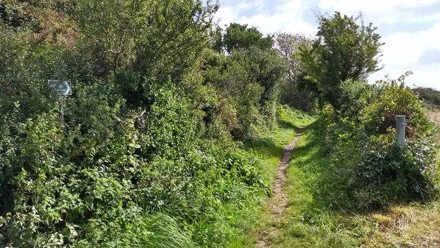 Bridleway near Colenso Cross