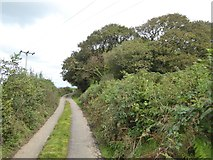 SX5597 : Woodland by the road to Westacombe by David Smith