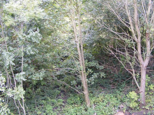 Overgrown Railway Line
