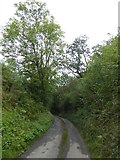 SS5500 : Leighclose Wood, Inwardleigh by David Smith