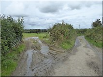 SS5400 : Field gateway by road to Norleigh Mill Farm by David Smith