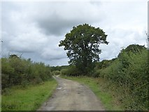 SS5500 : Tree on track north of Norleigh Mill Farm by David Smith