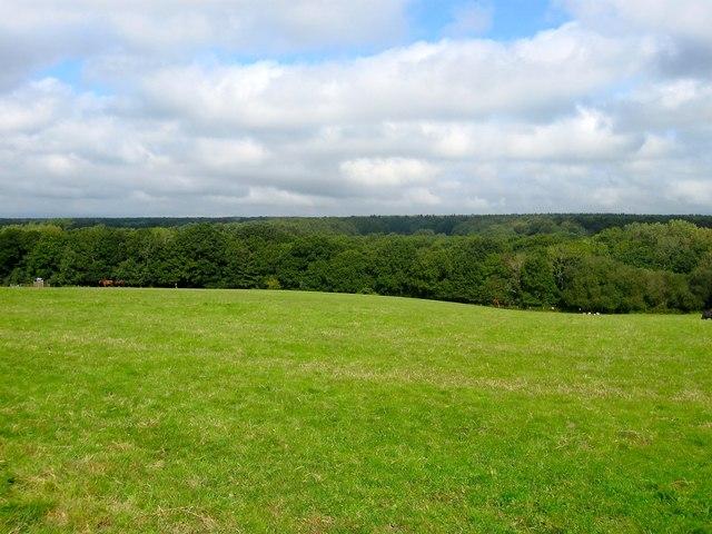 West Swillage Field
