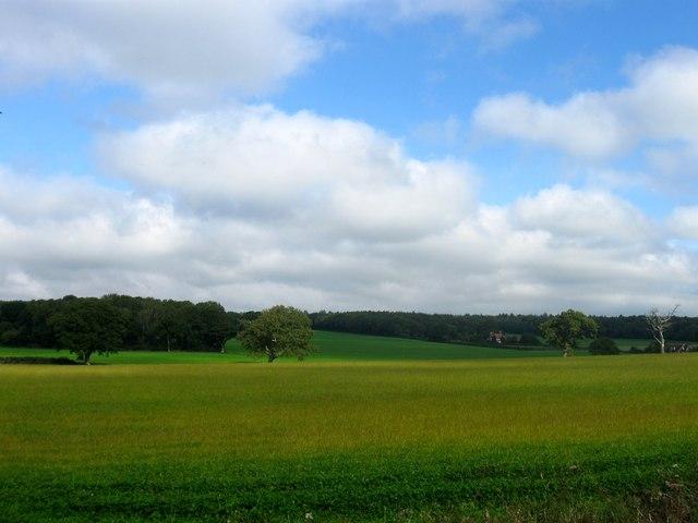 Churches Field (2)