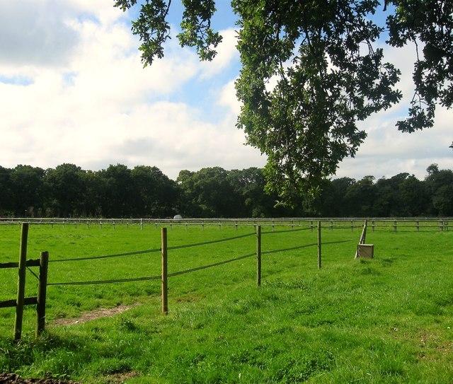 Upper Charloe Field/Lower Charloe Field