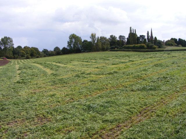 Patshull Road Field