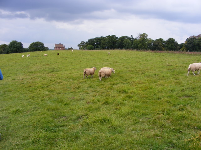 Nore Hill Field