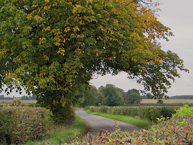 Lane near Whitwell-on-the-Hill