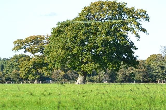 Tree in field near Hilltop House