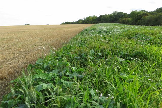 Stubble field with Nun wood beyond