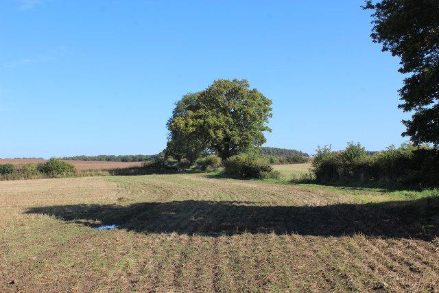 Field beside Stubbing Gate