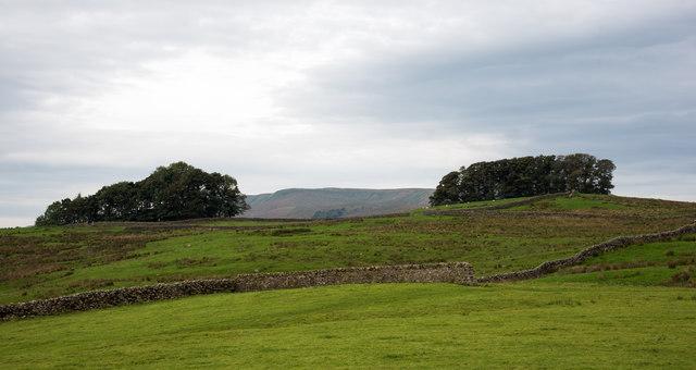 Two blocks of trees seen across fields