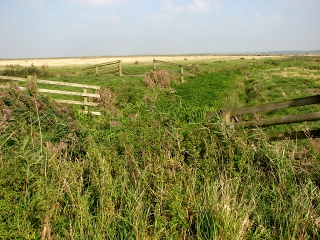 Overgrown drainage ditch in the Thurlton Marshes