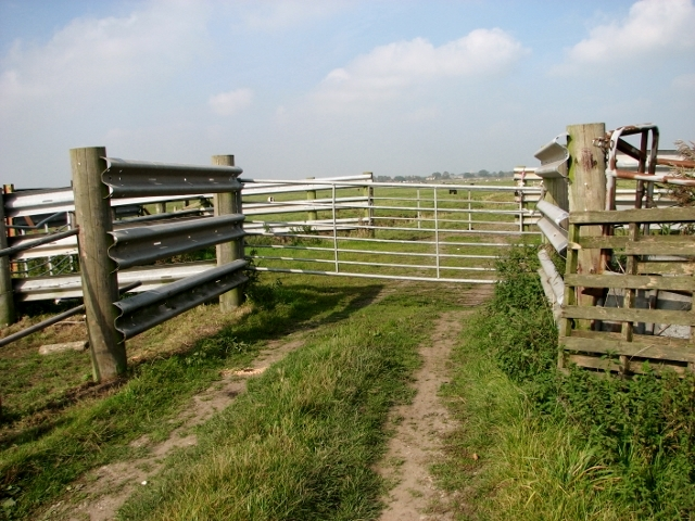 Cattle pens in the Thurlton Marshes