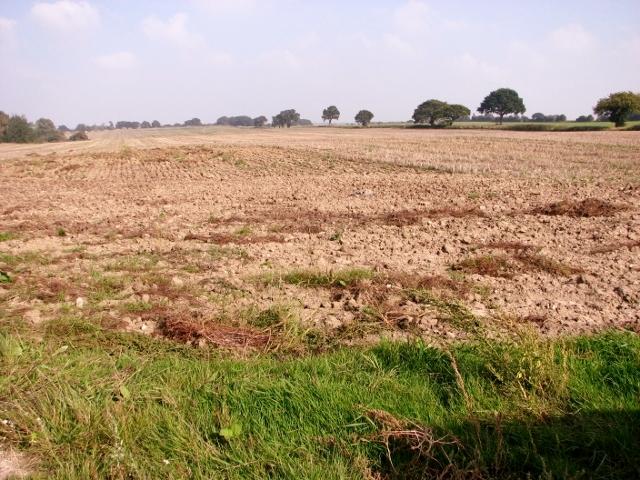 Crop field east of Long Road