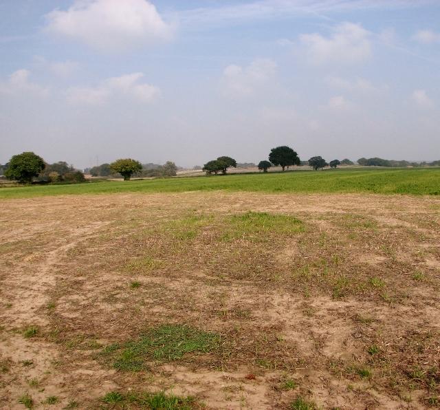 Crop fields by Lower Thurlton