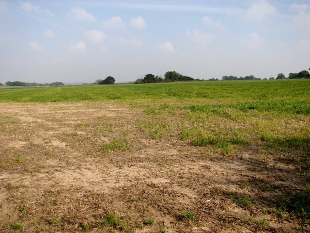 Cereal crop field beside Long Road