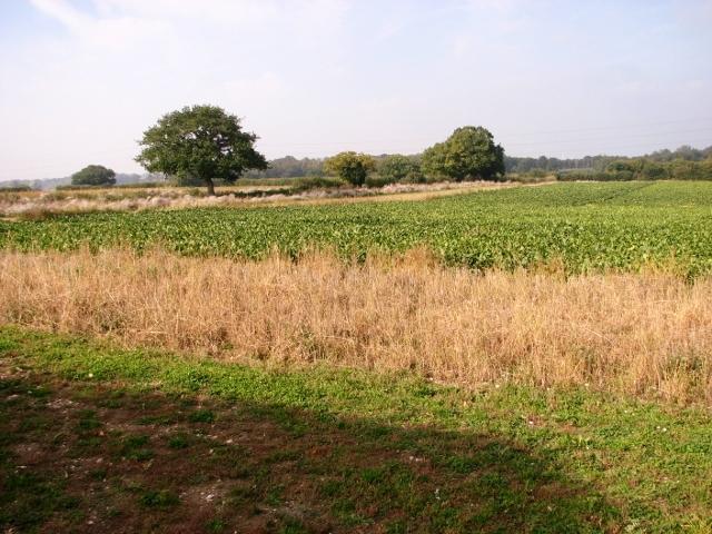 Crop fields north of Norton Road
