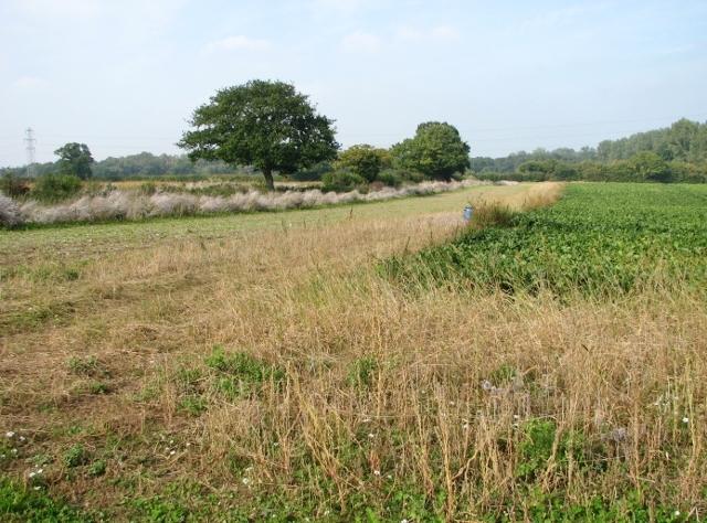 Fields west of Beacon Hill