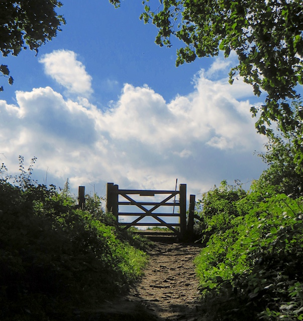 Gate out of the woods, near Welburn