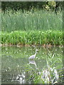 SP9657 : Rushes, Reeds and Heron by M J Richardson