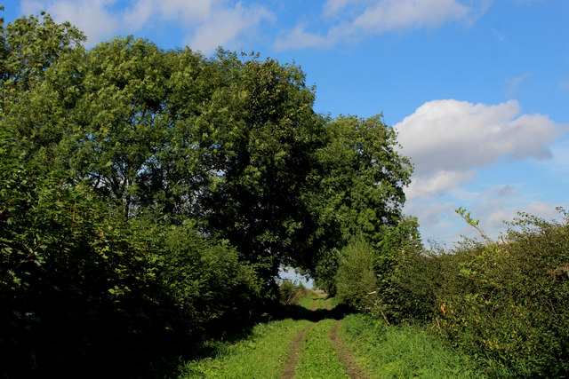 Track on High Moor