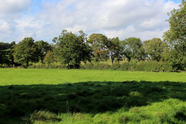 Pasture on High Moor