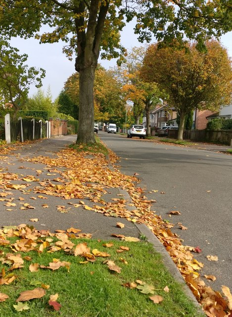 Linden Avenue in Countesthorpe