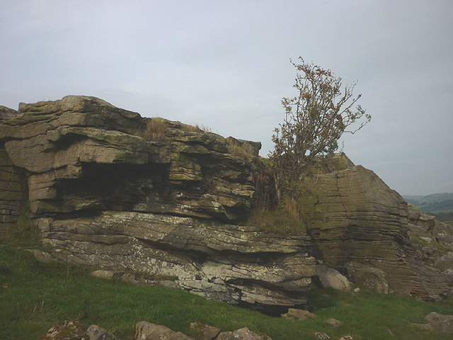 Tree and crag, Knott Copy