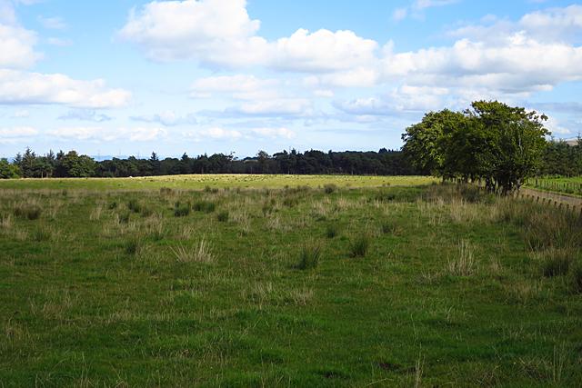 Fields near Pearie Law