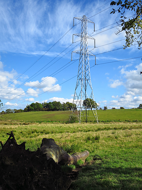 Pylon and Logs