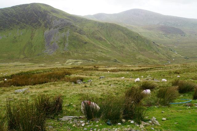 Sheep below Halfway House